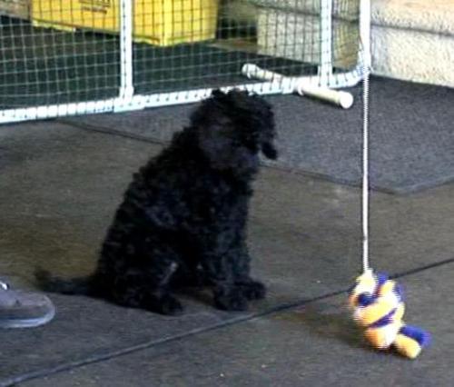 Pankies puppy test