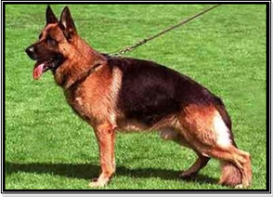 Current GSD