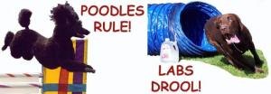 Poodles RUle