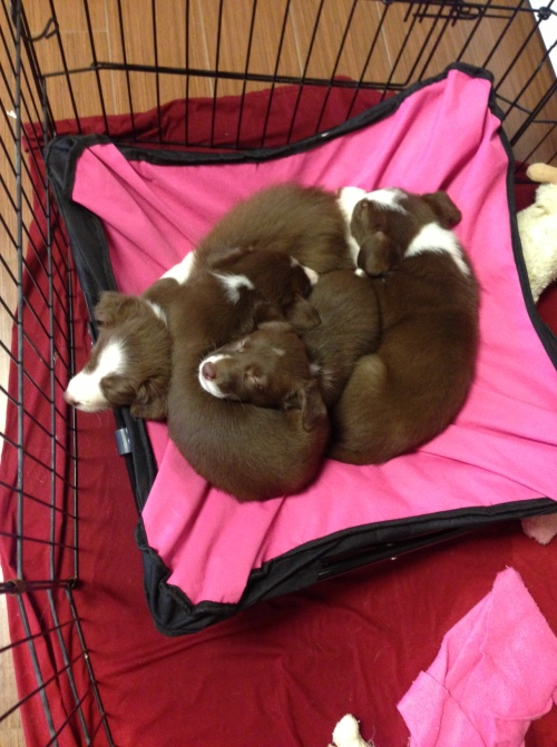 A pile of puppies on pink